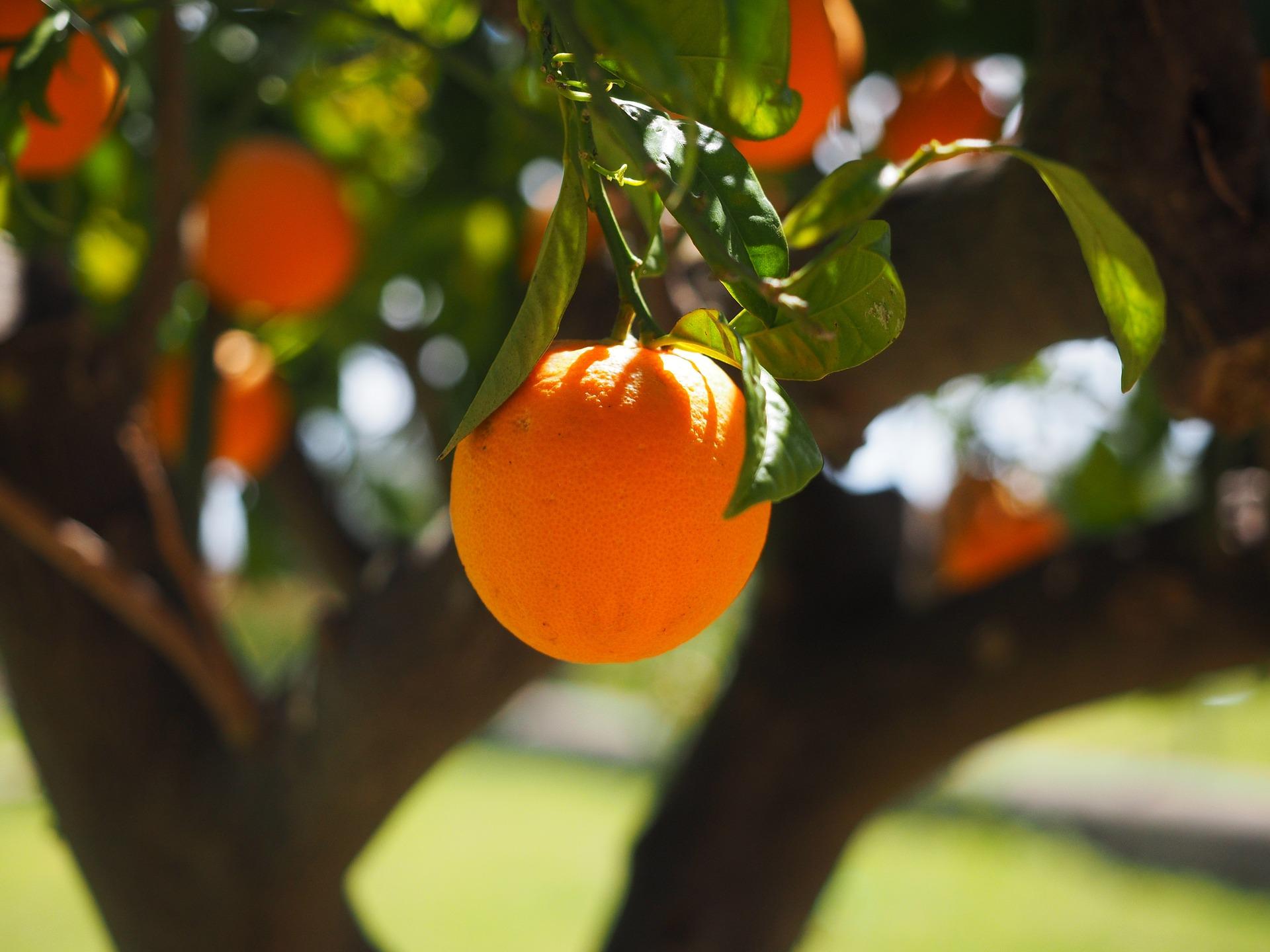 Zondag 22 maart - Uitwisseling moment over fruitbomen