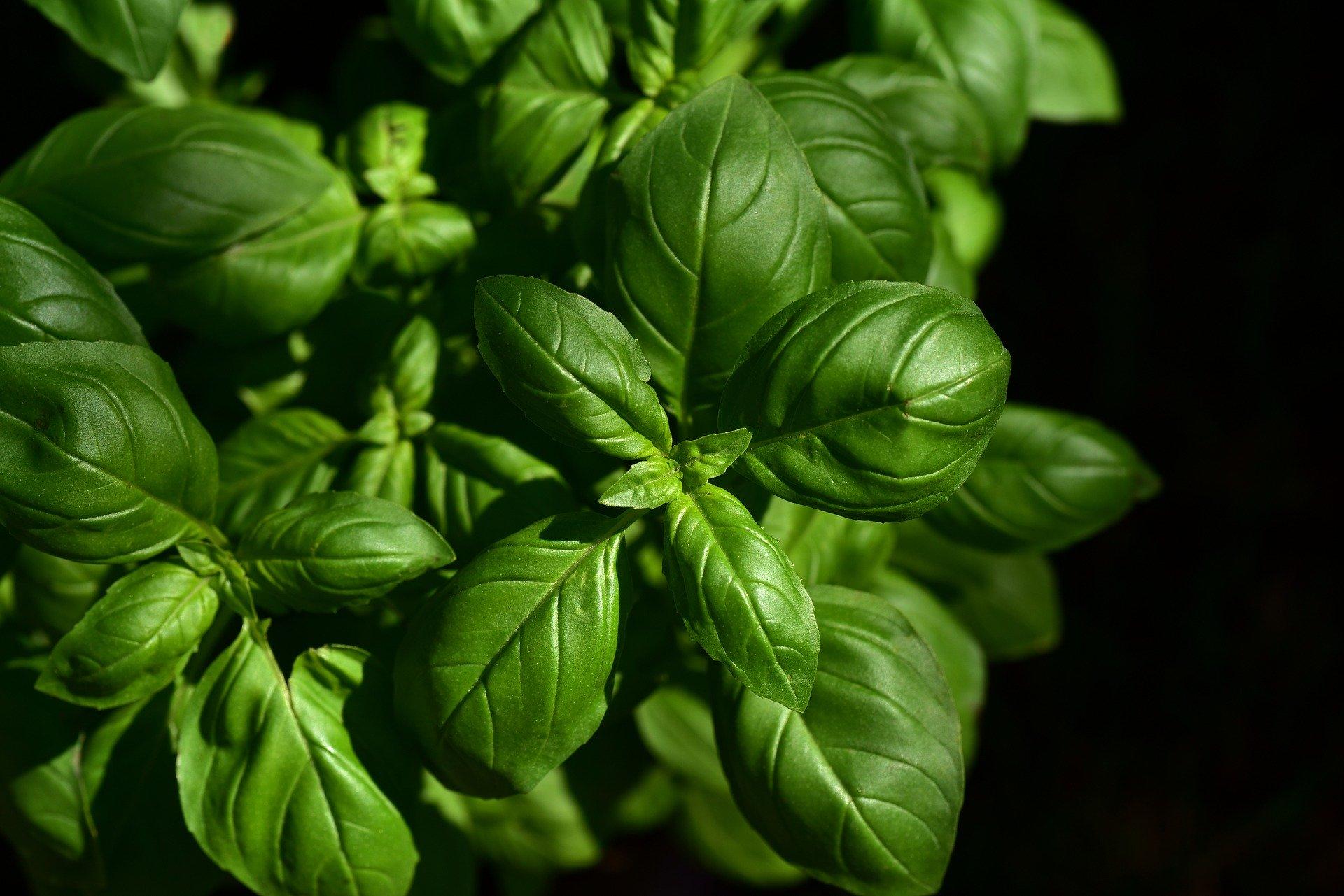 Wednesday april 29 - Walk: discover toxic/eatable/medicinal plants